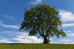 乡下孤立结构树 免版税库存照片
