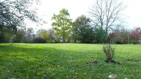 乡下庭院在秋天,在草上的寄生虫飞行,避免灌木和搅动下落的叶子 股票视频