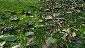 乡下庭院在秋天,在草上的寄生虫飞行 股票录像