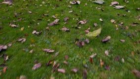 乡下庭院在秋天,在草上的寄生虫飞行 股票视频