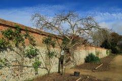 乡下庭院的一个美好的秋天场面有树的对墙壁 免版税库存照片