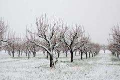 乡下果树园雪 库存图片