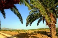 乡下棕榈树 免版税库存照片