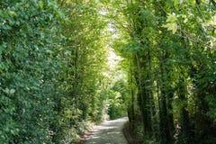 乡下步行通过树 免版税库存照片