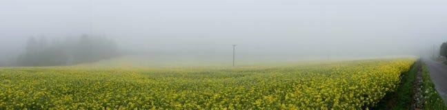 乡下油菜籽花田druing的雾全景 免版税库存图片