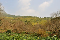 乡下的秀丽在中国 免版税库存照片