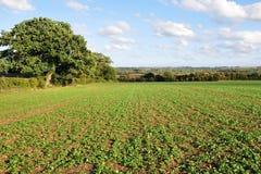 乡下英国农田视图 免版税库存照片