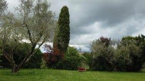 乡下行动与美丽的树和绿色草甸的时间间隔 股票视频