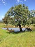 乡下西班牙风景在春天 库存图片