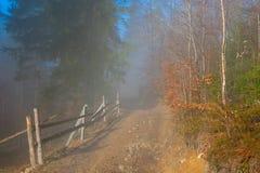 乡下路低谷有薄雾的森林 免版税库存照片
