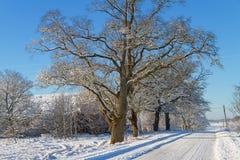 乡下路在一个冬天 库存图片