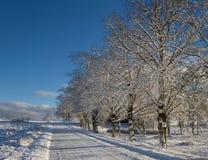 乡下路在一个冬天 免版税库存照片