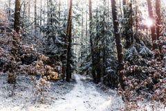 """乡下路在国家公园""""Sumava†的冬天森林里 免版税库存照片"""