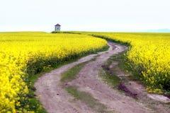 乡下路在开花的黄色强奸领域 免版税库存图片