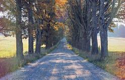 乡下路在秋天,欧洲 免版税库存照片