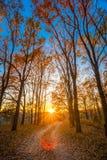 绕乡下路道路走道通过秋天森林日落日出 库存照片