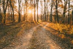 乡下路道路走道通过秋天森林日落,太阳 库存图片