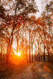 绕乡下路道路走道通过秋天森林日落 免版税库存图片