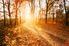 绕乡下路道路走道通过秋天森林日落 免版税库存照片