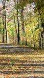 乡下运输路线被排行的结构树 免版税库存图片