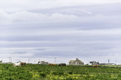 乡下风景在约翰o `少量附近的一个区域 图库摄影