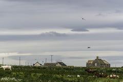 乡下风景在约翰o `少量附近的一个区域 免版税库存图片