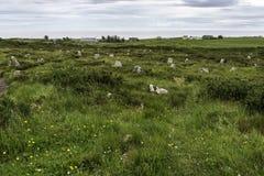 乡下风景在约翰o `少量附近的一个区域 免版税库存照片