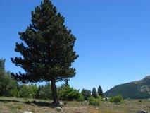 乡下风景结构树 免版税图库摄影