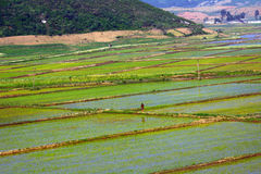 乡下,北朝鲜 免版税图库摄影