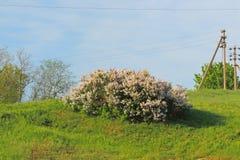乡区 领域 路 树 库存图片