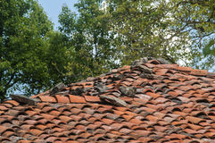 乡间别墅屋顶 图库摄影