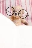 读书与玻璃的玩具熊 库存图片