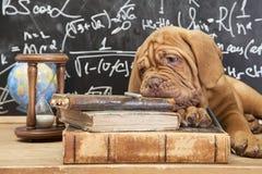 书和小狗 免版税库存图片