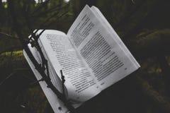 书和自然 库存图片