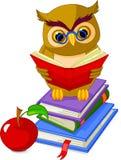 书猫头鹰堆坐明智 库存图片