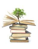 书生长结构树 库存图片