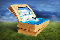 读书的概念 库存照片