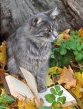 读书的猫 库存照片