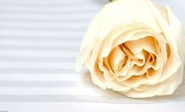 书音乐玫瑰白色 免版税库存图片