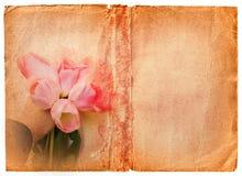 书grunge页粉红色郁金香 免版税库存图片