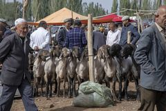 买家和卖主在绵羊市场,喀什,中国上 免版税库存照片