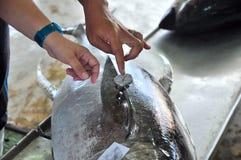 买家在海口检查金枪鱼的质量 免版税库存照片