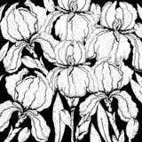 乱画在传染媒介的花卉背景与虹膜花乱画黑白上色页  免版税库存照片