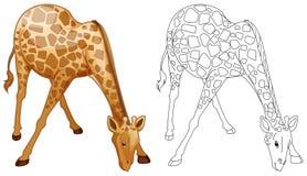 乱画野生长颈鹿的起草的动物 库存图片