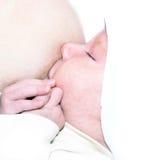 乳房提供 免版税库存照片
