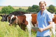 乳牛场场主画象有数字式片剂的在领域 库存照片