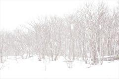 乳白天空条件在卡茨基尔暴风雪 免版税库存照片