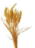 乳臭未干的麦子 库存照片