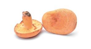 乳菇属volemus 库存图片