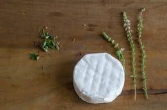 乳酪和草本 库存照片